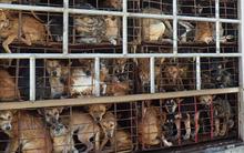 Kêu gọi chấm dứt đối xử tàn nhẫn với loài chó