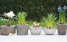Tự chế chậu trồng cây vintage thật dễ dàng