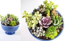 Tự chế vườn cây mini cho góc phòng thêm xanh