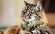 """Chú mèo 121 tuổi già nhất thế giới sở hữu lượng fan """"khủng"""" trên Instagram"""