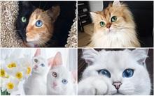 """Những chú mèo """"đánh cắp trái tim"""" của hàng trăm ngàn người trên mạng xã hội"""