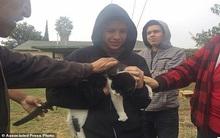 Mỹ: Cắt điện 250 nhà, cứu mèo kẹt trên cột điện 9 ngày