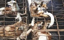 Hành trình chết chóc của chó nhập khẩu vào Việt Nam