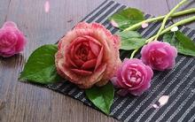 Tỉ mỉ tỉa củ cải thành hoa hồng siêu xinh bắt mắt