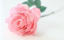 Mách bạn cách làm hoa mẫu đơn giấy đẹp lung linh