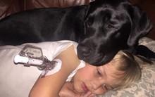 Mẹ ngủ quên, chú chó nhỏ trở thành anh hùng cứu sống bé trai 7 tuổi