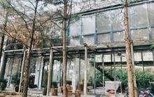 Ngôi nhà gỗ cách trung tâm Hà Nội 30 phút đi xe, đẹp như bước ra từ phim Chạng Vạng