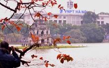 Chùm ảnh: Hà Nội bất ngờ đẹp mơ màng mùa lá bằng lăng đỏ