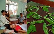 Ăn rau dền tự trồng, cả gia đình bị kích động, lúc cười lúc chửi bới