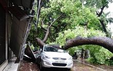 Bão số 1 gây mưa to, gió giật tàn phá nặng nề, nhiều khu vực tại miền Bắc mất điện