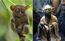 Phát hiện sinh vật kỳ lạ giống nhân vật trong phim