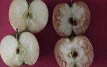 Với 2 quả táo, cô giáo này đã đưa ra 1 bài học đắt giá cho tất cả trẻ em và người lớn