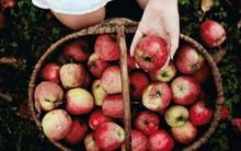 Từ cách chọn mua táo bất ngờ biết ngay khả năng làm giàu của bạn?