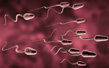 Phát hiện chấn động: 2 người đàn ông có thể sinh con với nhau, không cần phụ nữ