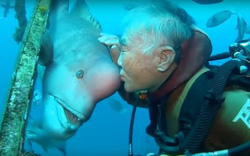 Ai mà ngờ được, trong suốt 25 năm, ngày nào ông cụ 79 tuổi cũng hôn cá đầu cừu
