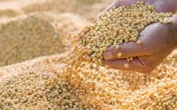 Cây trồng công nghệ sinh học đóng góp ra sao cho nền nông nghiệp?