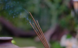 Hương cuộn tàn: Tưởng là đẹp mà lại cực độc