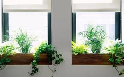 Phòng trang trí tuy đơn giản vẫn lung linh khi làm đẹp khung cửa sổ với 7 ý tưởng độc lạ này