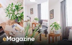 Cây xanh - cách làm mới không gian sống nhanh, rẻ, dễ ứng dụng để đón hè vào nhà
