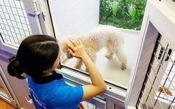 Tìm hiểu về dịch vụ trông giữ chó mèo tại Pet Mart