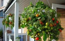 6 loại rau củ quả bạn có thể trồng trong giỏ mà vẫn sai quả, tươi tốt