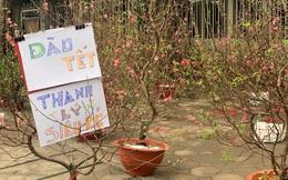 Hà Nội ngày 29 Tết: Giá đào quất tại chợ hoa đã hạ nhiệt, người tiêu dùng mua vội về ăn Tết