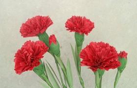Hướng dẫn làm hoa cẩm chướng cực đẹp và dễ thương trang trí không gian sống!