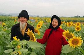 """""""Ông bà anh"""" lại xuất hiện trên cánh đồng hoa hướng dương khiến bao người mơ ước"""