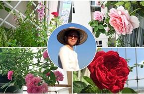 Ban công vỏn vẹn 6m² nhưng trồng đủ loại hồng thơm ngất ngây của bà mẹ hai con ở Hà Nội