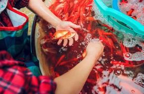 Cận cảnh chợ cá chép phục vụ Tết ông Công, ông Táo lớn nhất tại Hà Nội