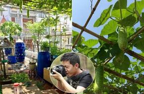 Choáng ngợp trước khu vườn trên sân thượng đầy rau sạch, gà ngon của anh chồng đảm Sài Thành