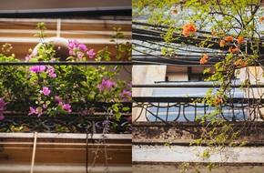 Cuối tuần, ngắm những ban công cũ xinh xắn đầy hoa của Hà Nội phút giao mùa