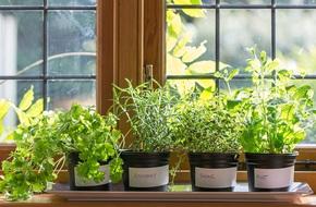 Những khung cửa sổ đẹp hút hồn nhờ chậu cây đầy sức sống
