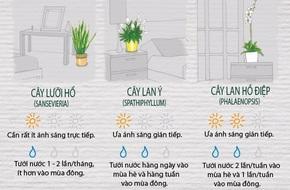 12 loại cây cảnh đặc biệt sống tốt nếu để trong nhà và