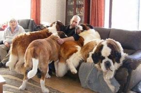 Những con thú cưng khổng lồ như sắp đè bẹp chủ nhân