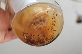 Nhà bếp sạch bóng ruồi muỗi với cách làm cực đơn giản dưới đây