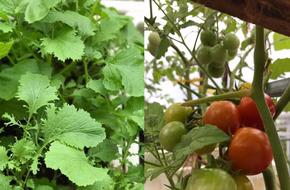 Sân thượng 10m² xanh mướt của bà mẹ dám bỏ sự nghiệp để ở nhà trồng rau, chăm con