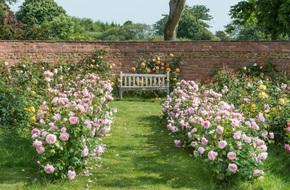 Khu vườn hoa hồng đẹp hơn cổ tích của người đàn ông được phong danh là