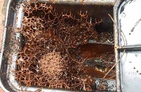 Mở hộp đựng đồng hồ, gia đình tá hỏa phát hiện ra vật thể kỳ quái chưa từng thấy