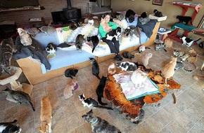 Người phụ nữ nhận hơn 1.000 con mèo về làm thú cưng