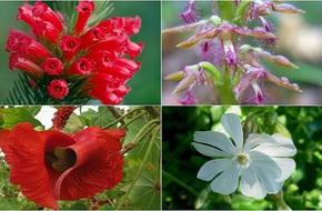 Những loài hoa độc nhất vô nhị chỉ mọc duy nhất một chỗ trên hành tinh