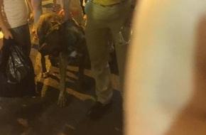 Về vụ nam thanh niên dẫn chó dữ vào phố Hàng Mã