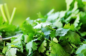 Chuyên gia Đông y lý giải công dụng chữa bách bệnh của loại rau gia vị rẻ tiền, người Việt rất hay ăn