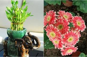 Cứ dịp Tết đến mọi người lại đi mua 10 loại hoa này để trang trí nhà cầu may