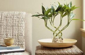 Năm mới hãy trồng 7 cây này để nhà lúc nào cũng đầy may mắn, tài lộc