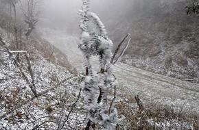 Chùm ảnh: Tuyết đã rơi trên vùng cao Y Tý, cây cối bao phủ bởi băng tuyết dày