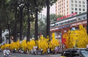 Mai vàng nở rộ khắp Sài Gòn, người người tràn ra đường du xuân sớm
