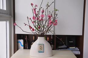 Bạn có thể tự tin mua bất kỳ loài hoa nào dịp Tết khi biết 4 cách chăm sóc hoa đơn giản này