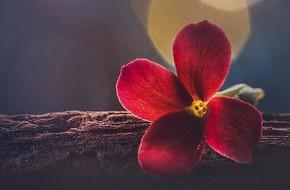 Chủ nhật của bạn (4/2): Xử Nữ may mắn toàn diện
