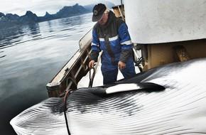 Quốc gia gây tranh cãi nhất 2018: ra quyết định tiếp tục giết và tiêu thụ hàng ngàn con cá voi